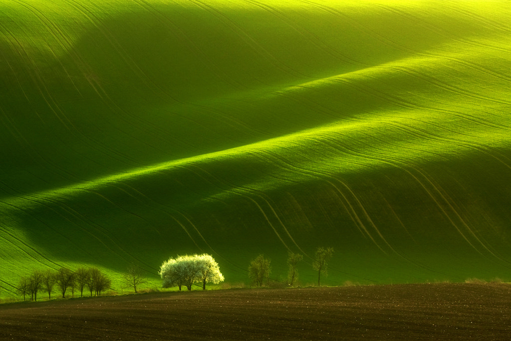 Photograph Spring by Marcin Sobas on 500px
