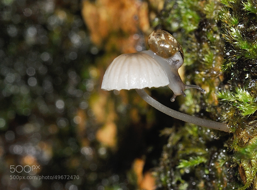 Micro mushroom and snail