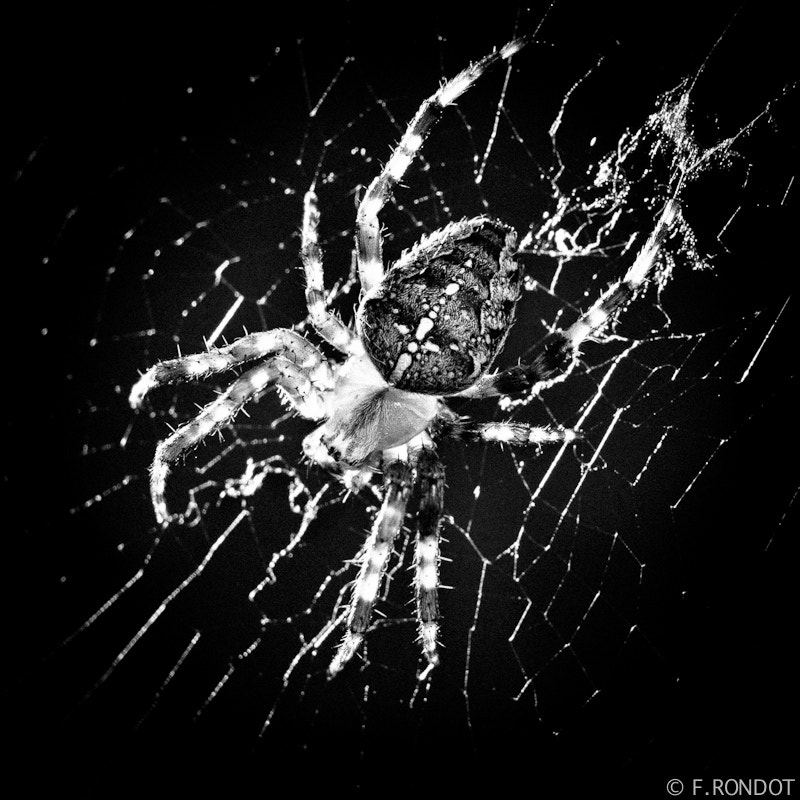 Photograph 3 - Spyder in black by Franck RONDOT on 500px