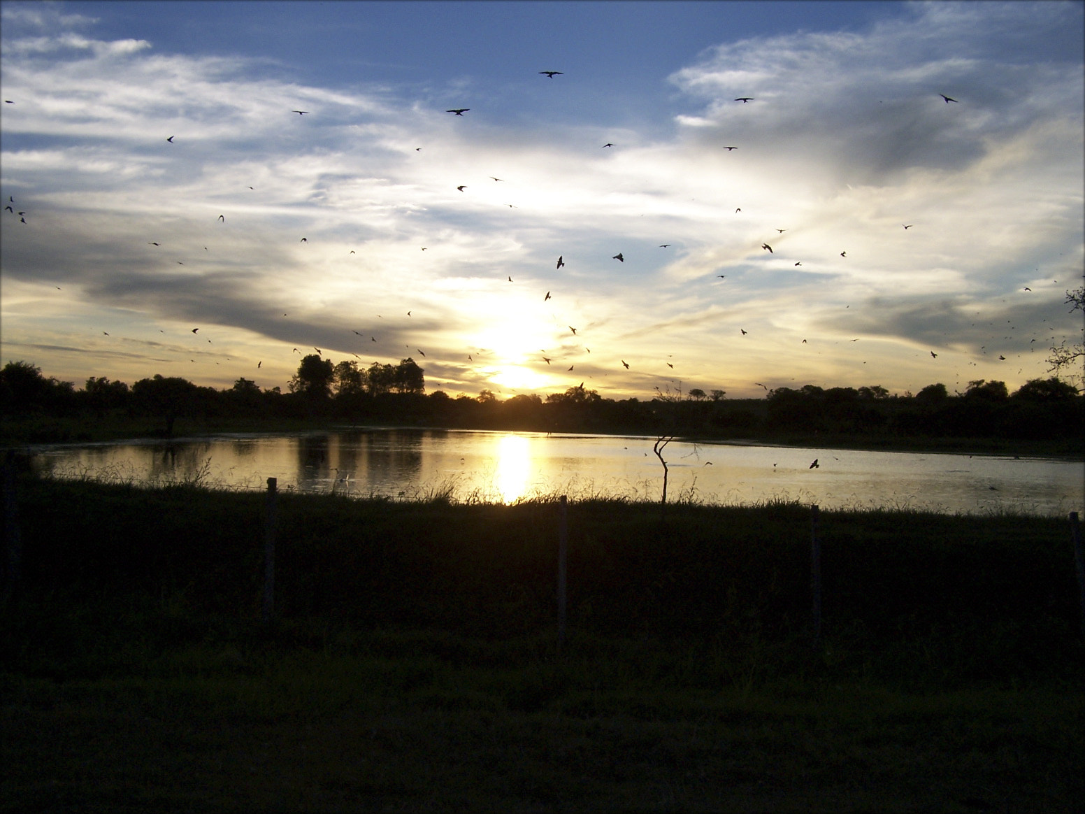 Photograph Swallows over the lake at sunset. by Edgar Salgado on 500px