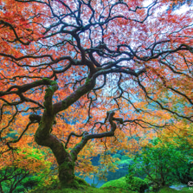 Dragon's Breath by Aaron Reed on 500px.com