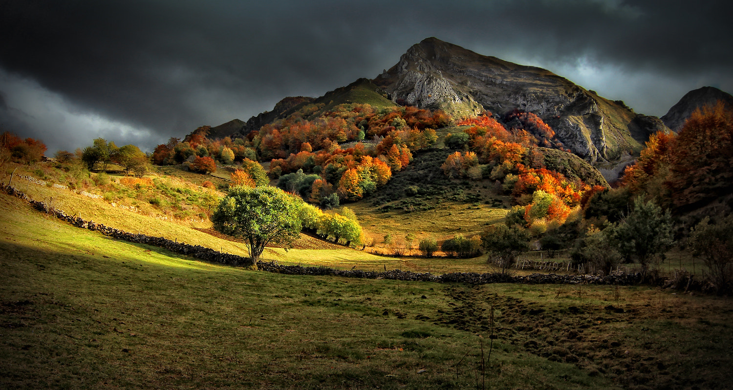 Photograph Autum light (tribute to Kaleshi) by Amador  on 500px