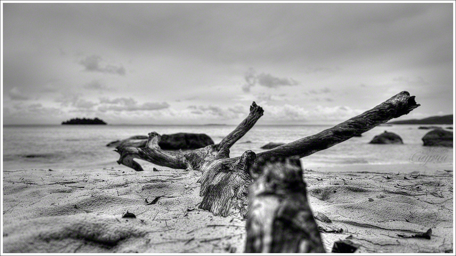 Photograph Drift Wood at the Beach by Manish Gajria on 500px