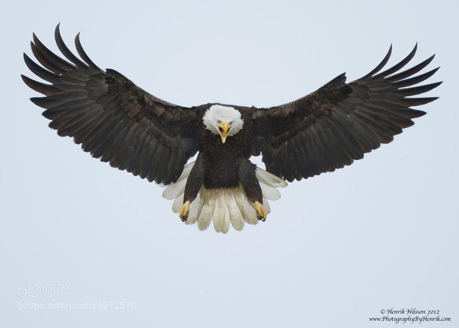 Spread Eagle 103