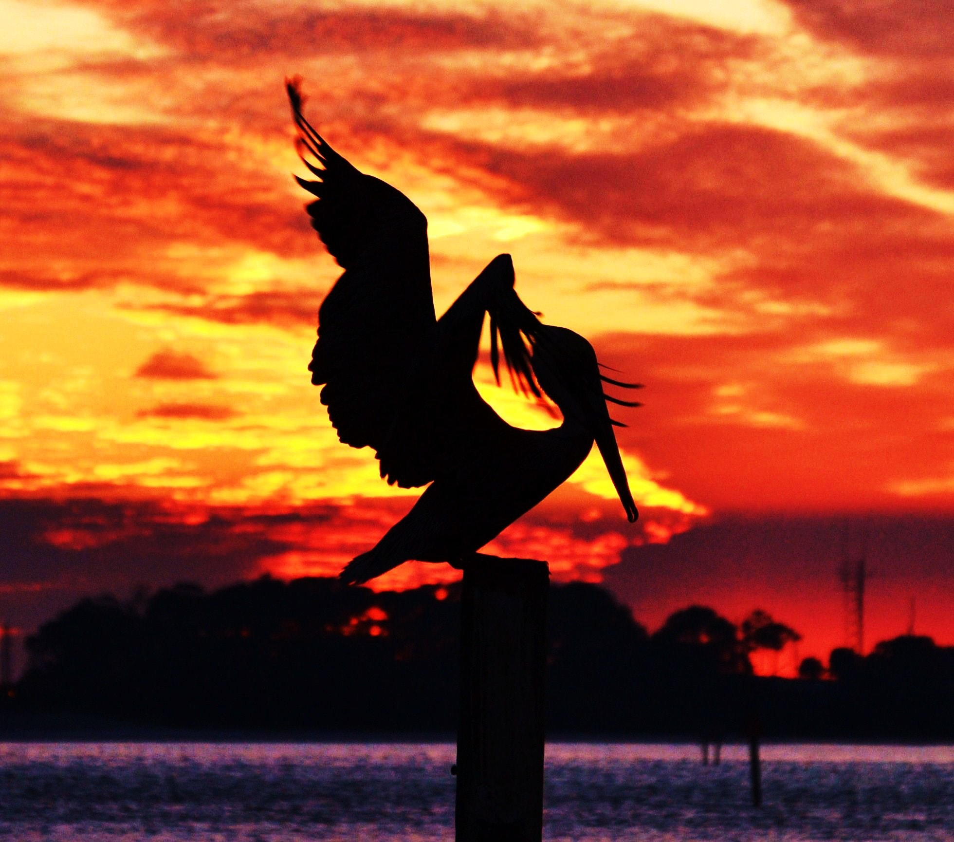 Photograph Pelican at Dusk by Michael Fitzsimmons on 500px