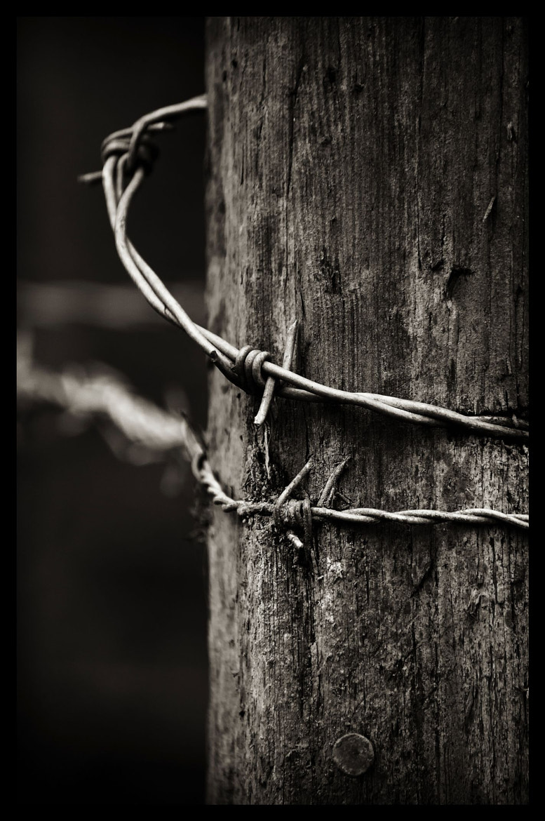 Photograph Barbed by Steve FGA on 500px