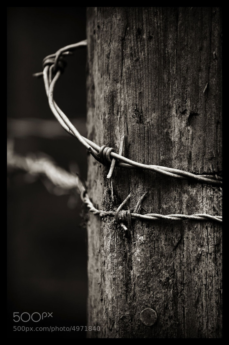 Photograph Barbed by Steve SMP on 500px