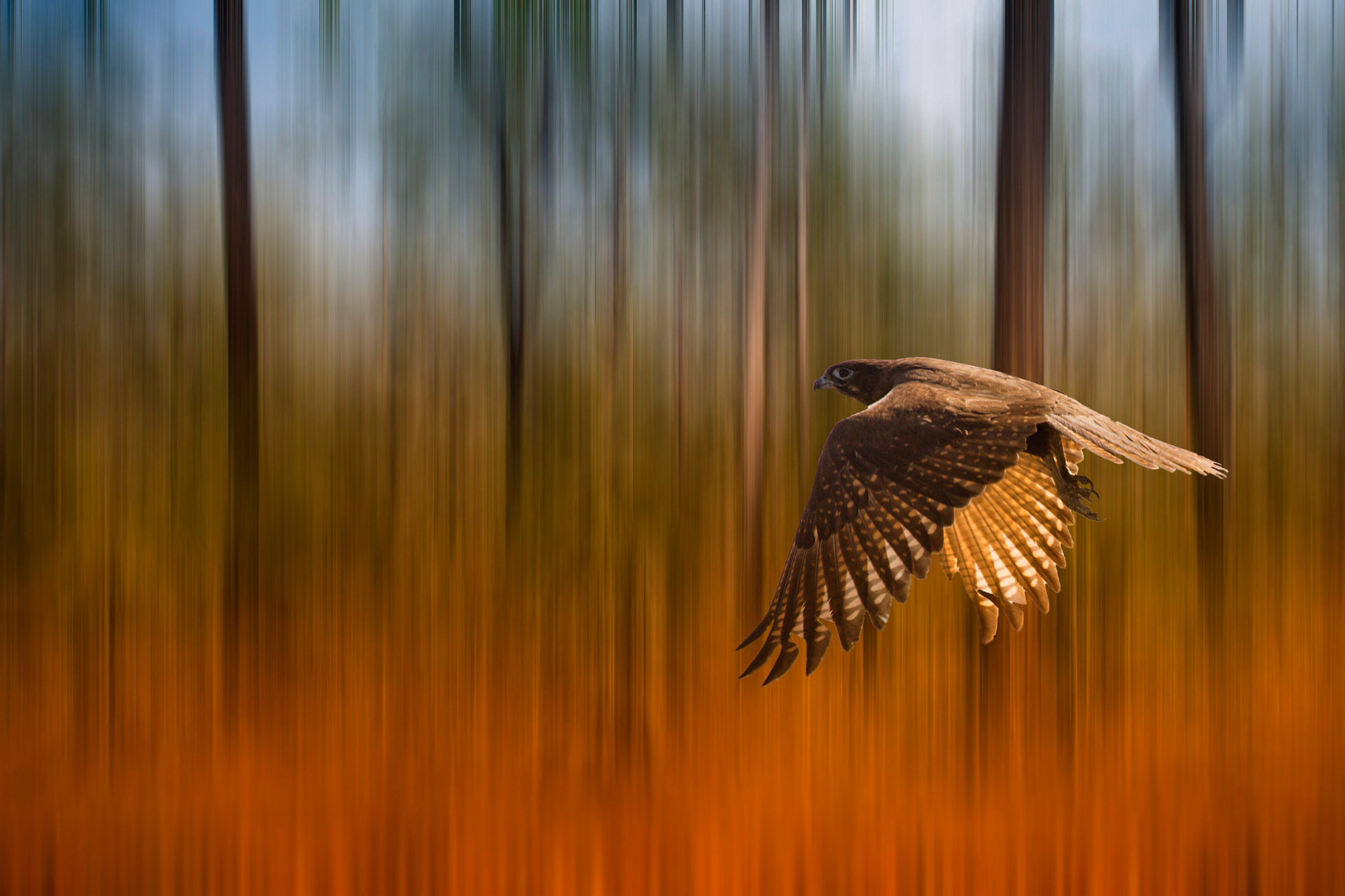 Photograph Fly Away Dream by Margaret Morgan on 500px