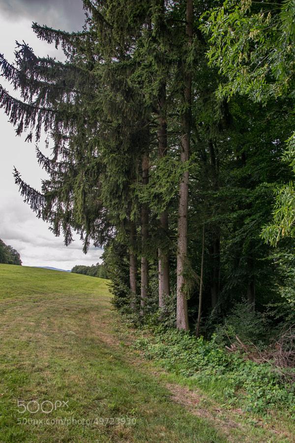 20130825-Berlingen.Forest-009