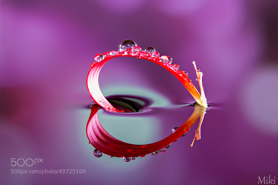 Photograph Heart Object by Miki Asai on 500px