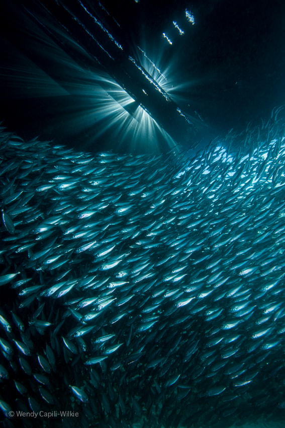 Photograph sunrays and sardines by Wendy Capili-Wilkie on 500px