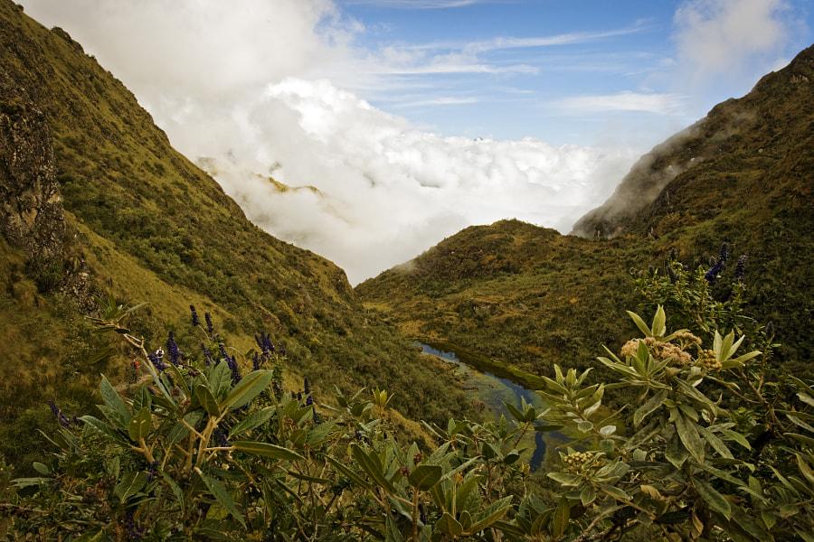 Jungle in the Clouds