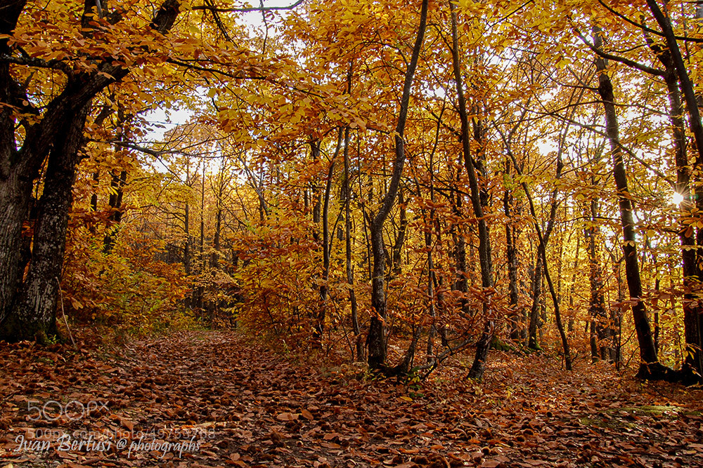 Photograph Colors of the wood by Ivan Bertusi on 500px