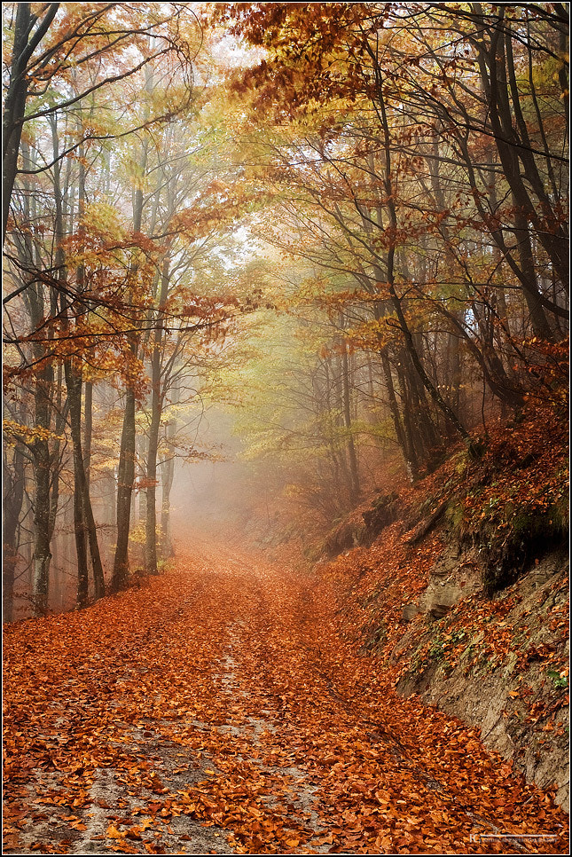 Photograph Memories of autumn by Francesco Cosi on 500px