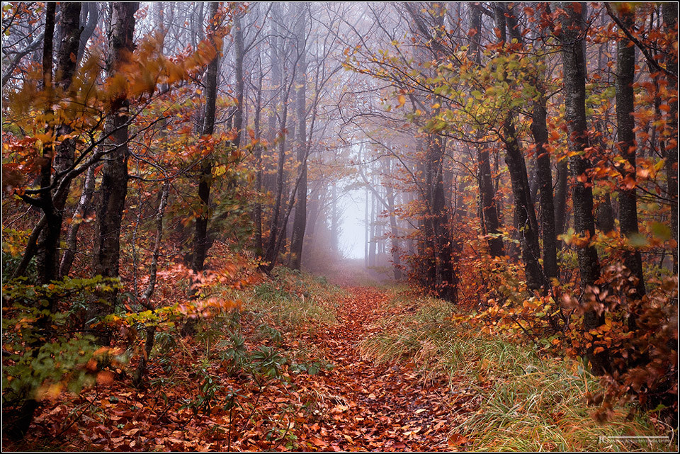 Photograph Mysterious path by Francesco Cosi on 500px