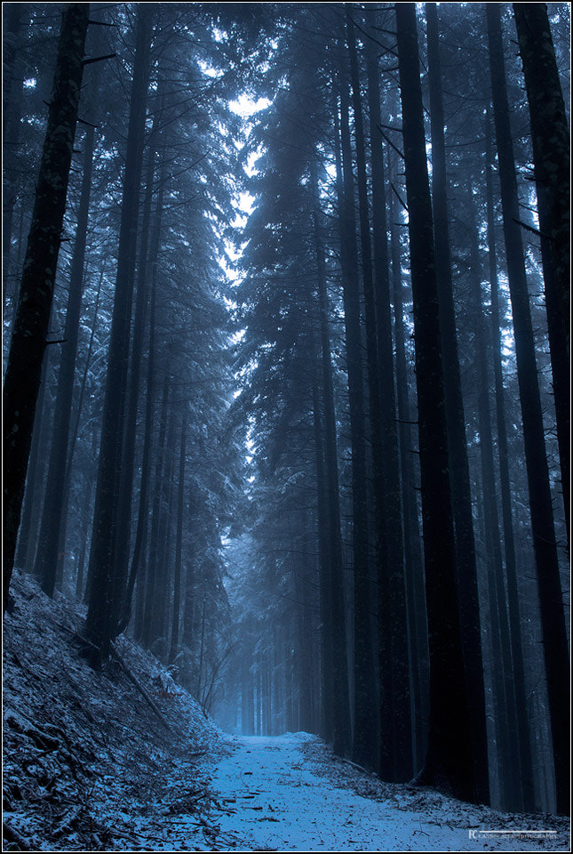 Photograph The great forest of vallombrosa by Francesco Cosi on 500px