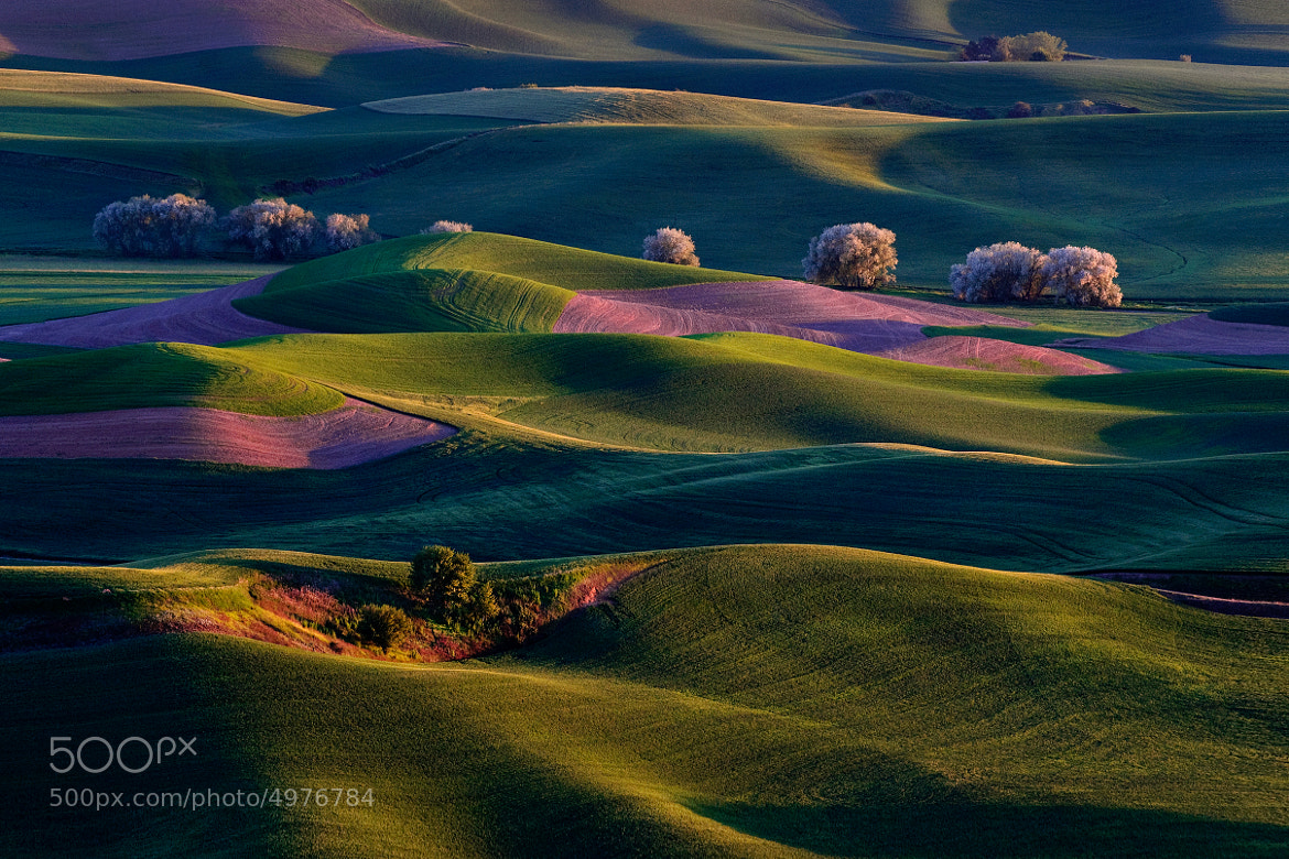 Photograph Sunrise on Palouse Hills by Randall  Roberts on 500px