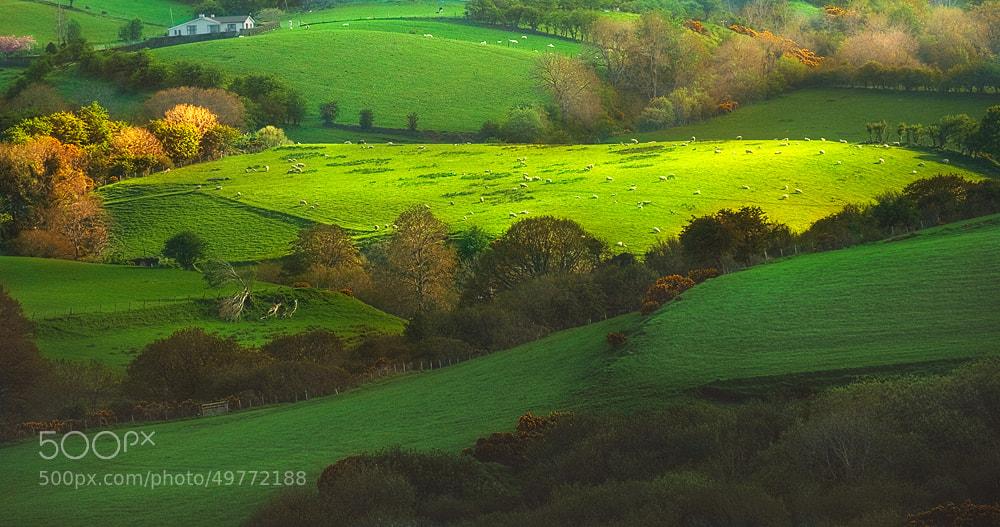 Photograph Beauty of sheepland by Lukasz Maksymiuk on 500px