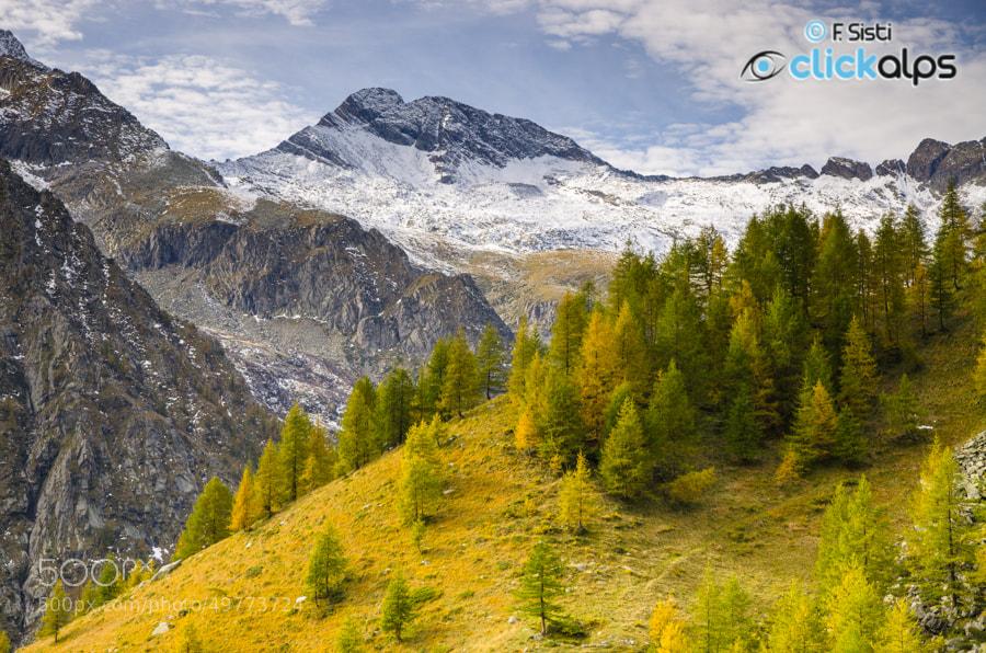Photograph Semplice dolcezza nel paesaggio... (Vallone di Campiglia, Valle Soana, Parco Nazionale Gran Paradiso by Francesco Sisti on 500px