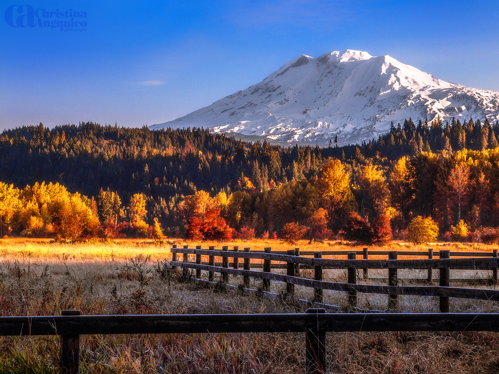 Photograph Fenced In by Christina Angquico on 500px