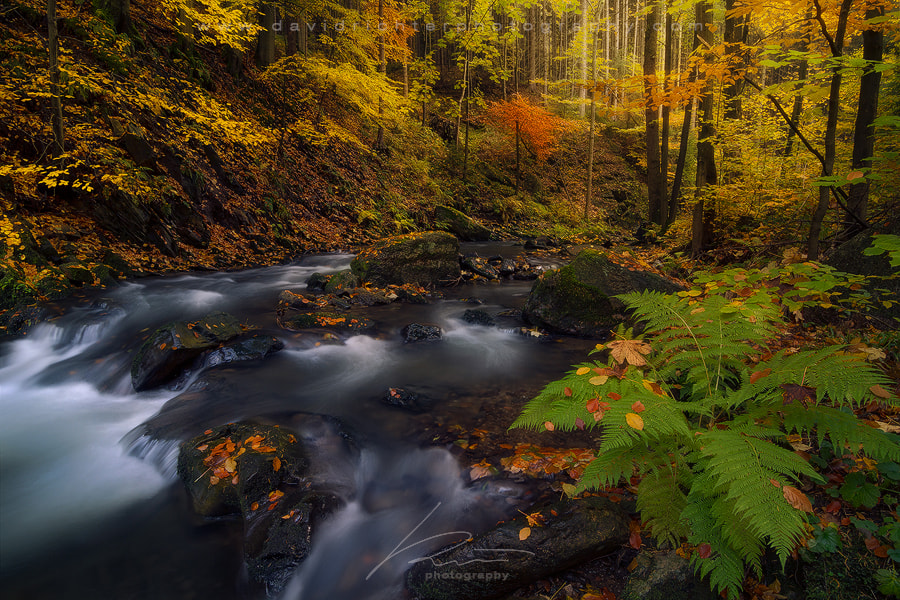 Photograph Autumnal Flow by David Richter on 500px