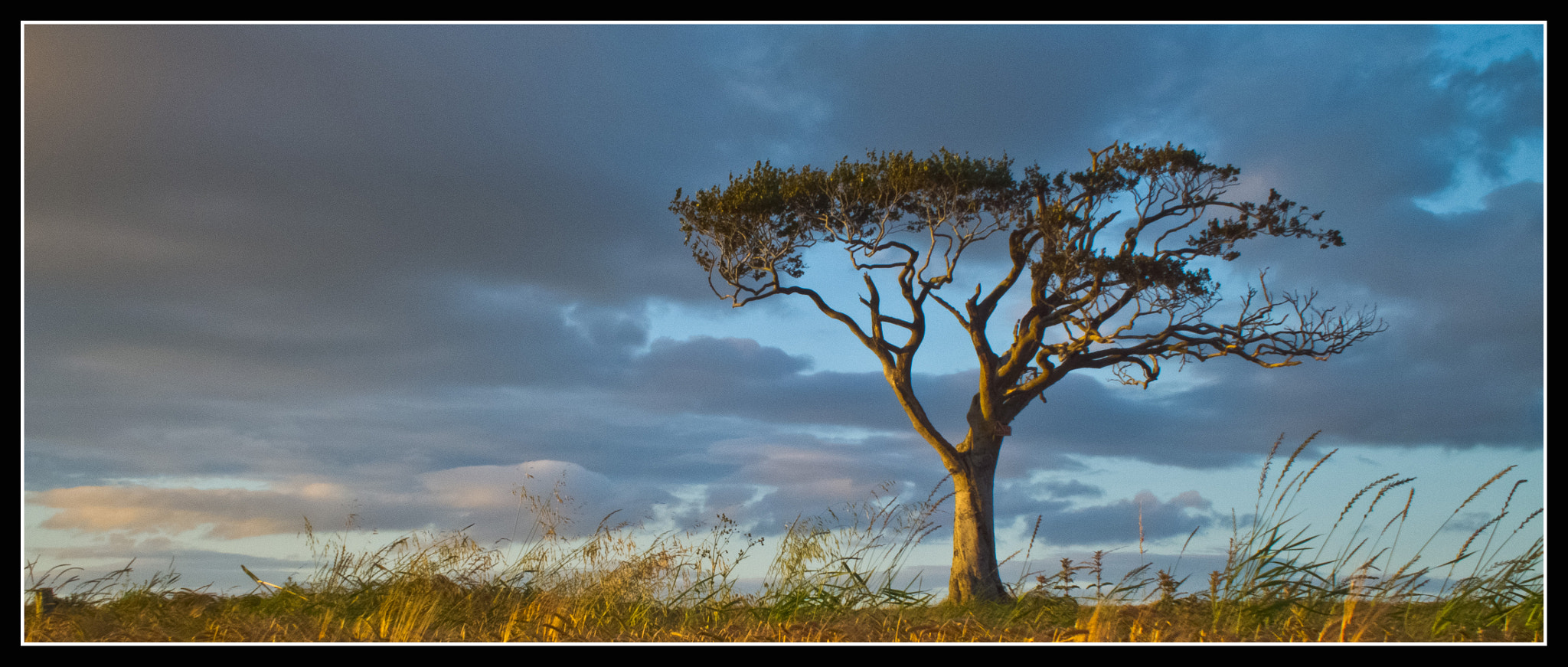 Photograph Tree by Jonny Andrews on 500px