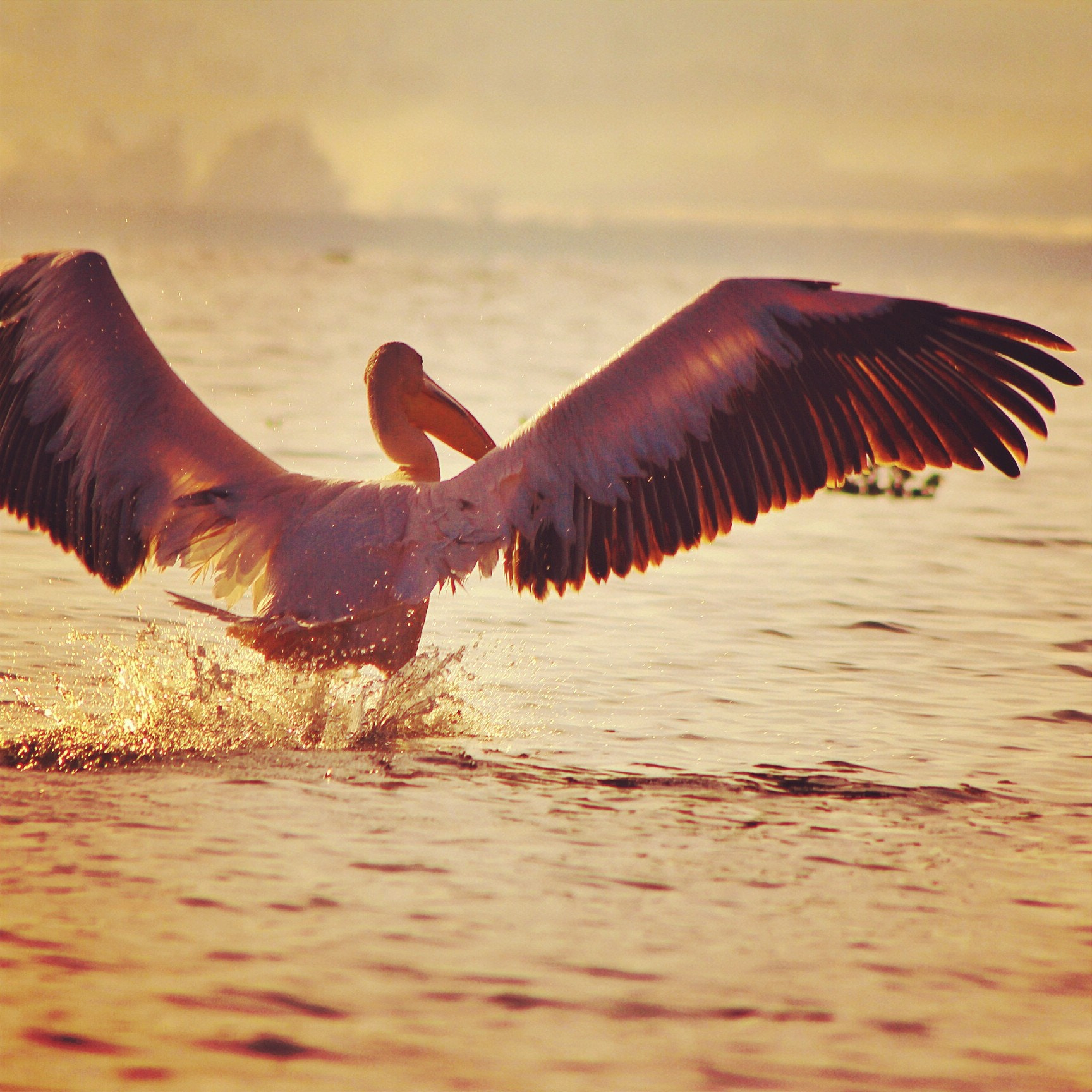 Photograph Take off by Peter Ndung'u on 500px