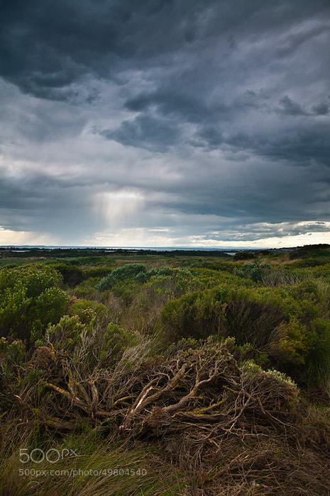 Photograph The Plains by Joshua Tagicakibau on 500px