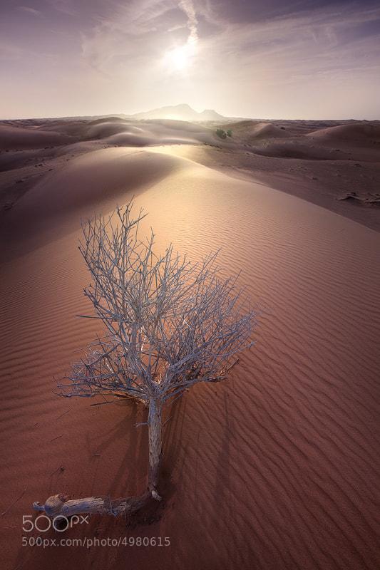 Photograph Never give up by abinali  | Abdulaziz Bin Ali on 500px