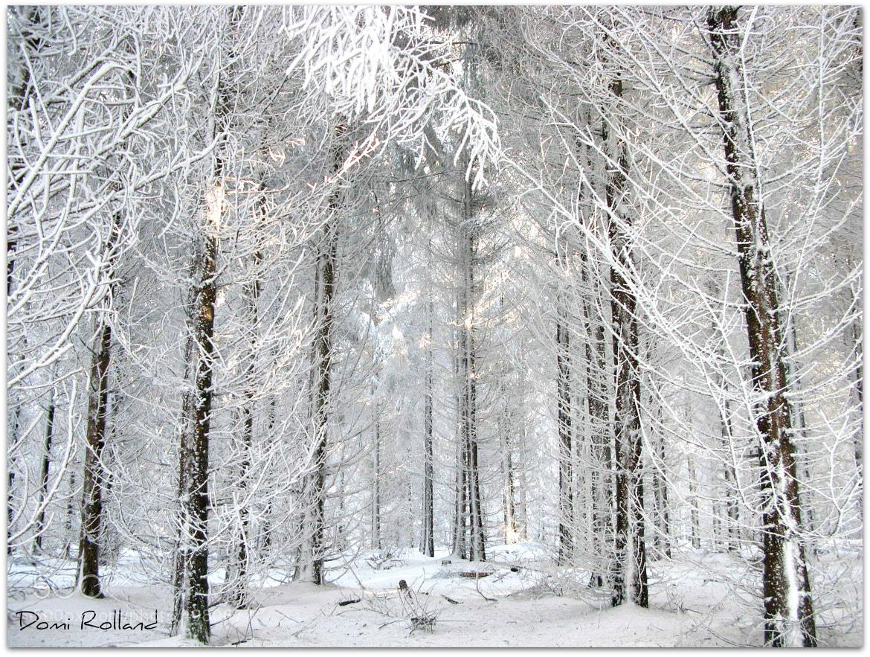 Photograph La forêt des Fées by Dominique Rolland on 500px