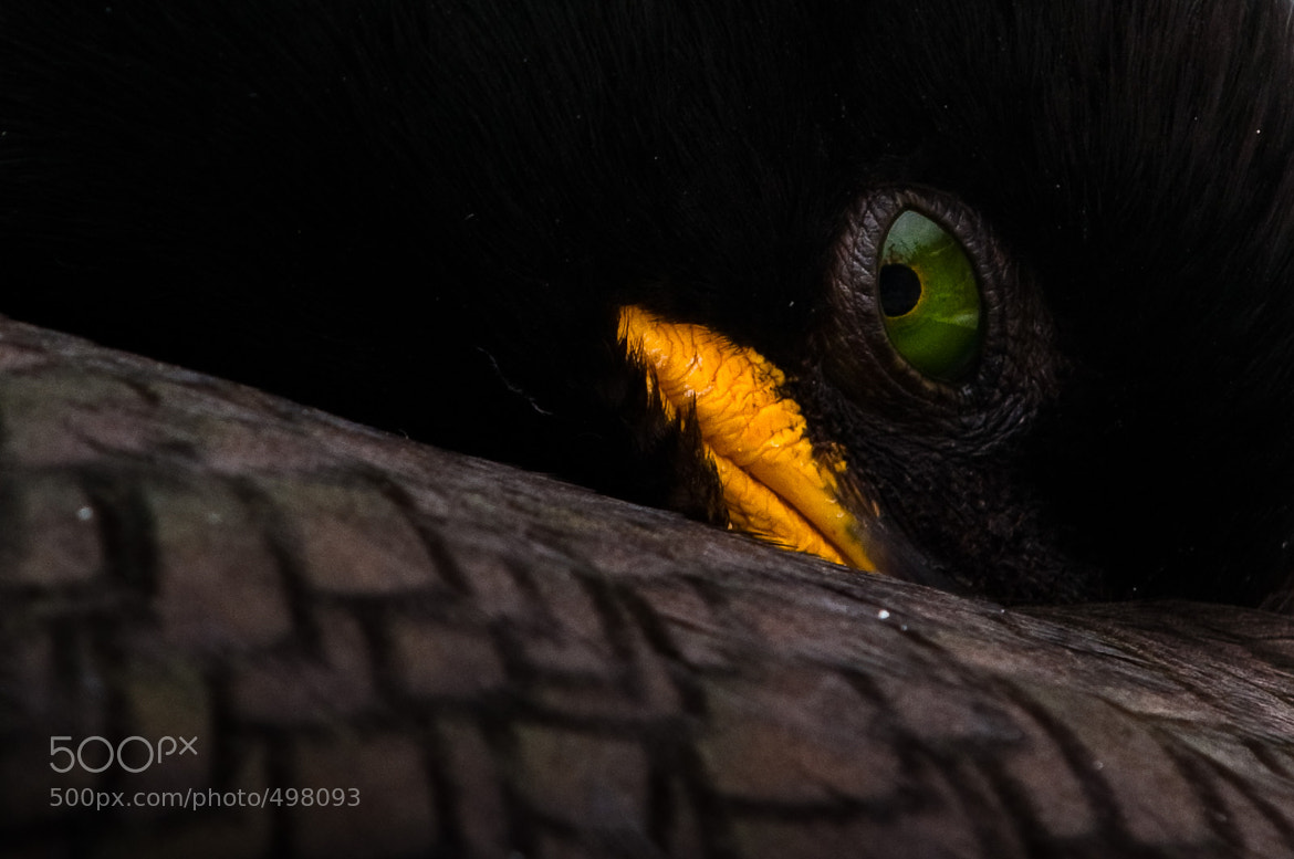 Photograph Hidden by Gorazd Golob on 500px