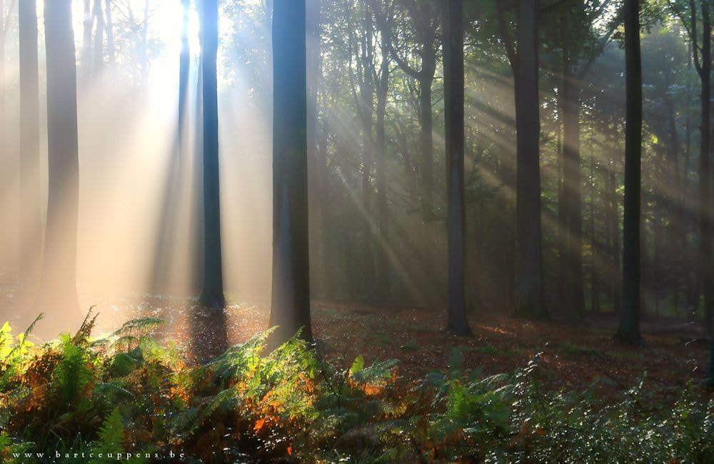 Photograph magical moments part 6 by Bart Ceuppens on 500px