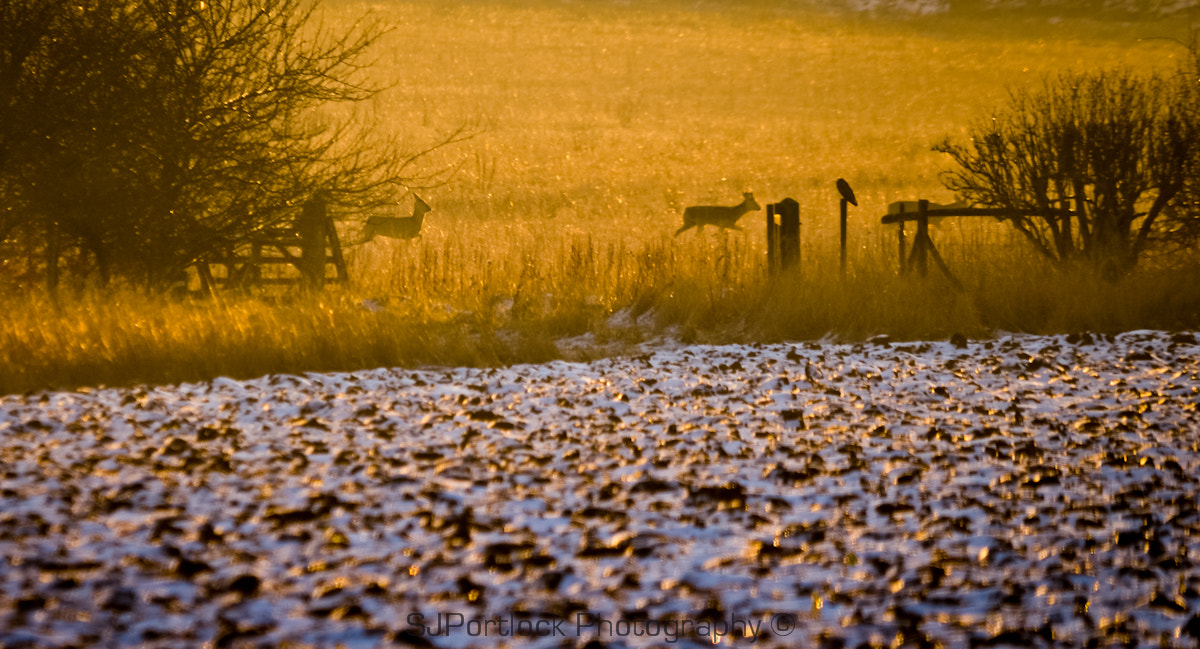 Photograph Winter Wildlife  by Stephen Portlock on 500px