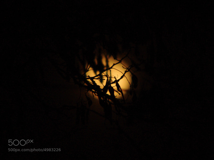 Photograph Moon & Tree by Adam Jäger on 500px
