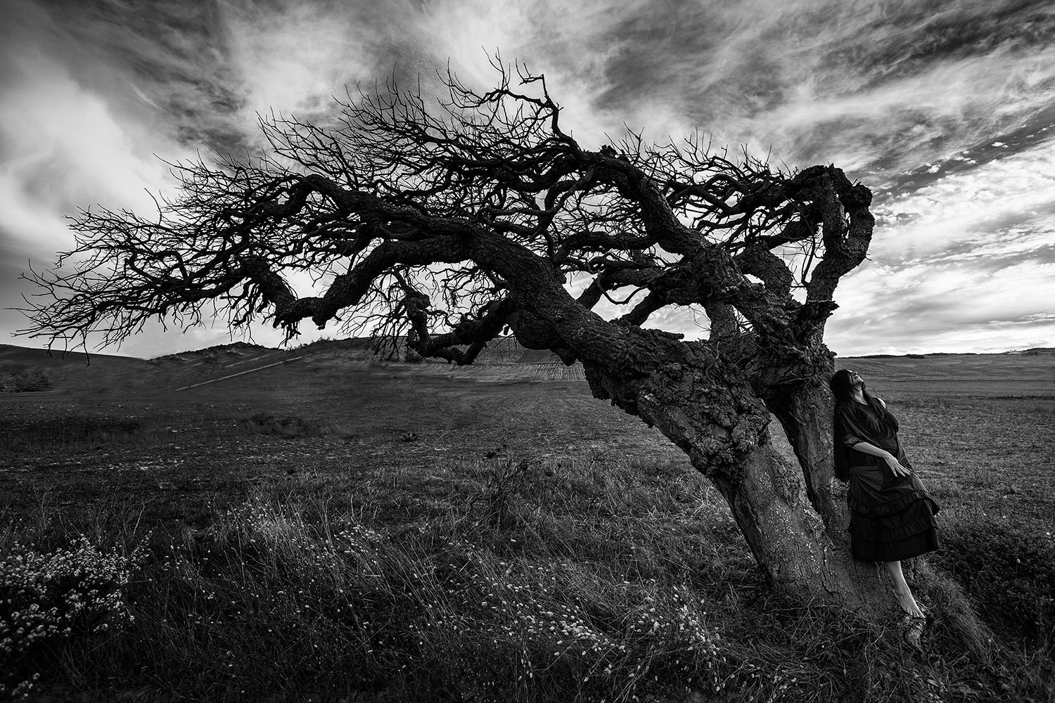 Photograph the tree of the witch by Marco Redaelli on 500px