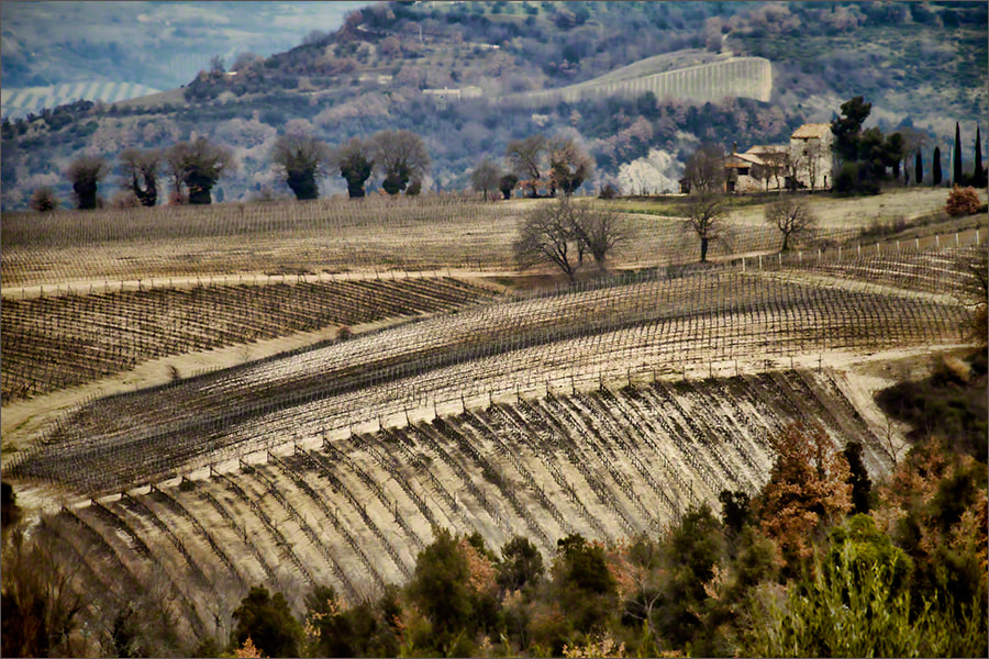 Photograph Umbrian Vineyards from the Barberani Winery by Andrew Barrow LRPS on 500px