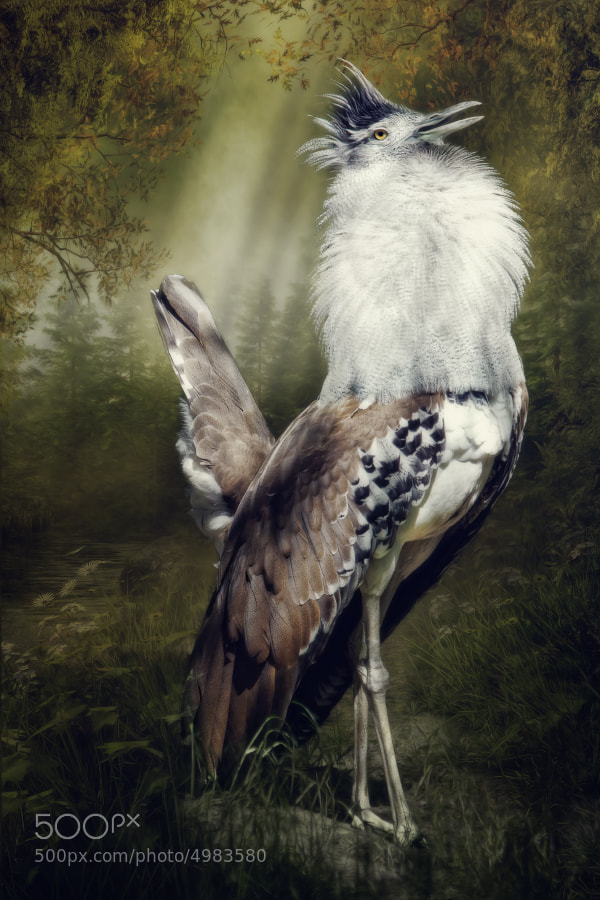 Photograph Proud Kori bustard by Manuela Kulpa on 500px