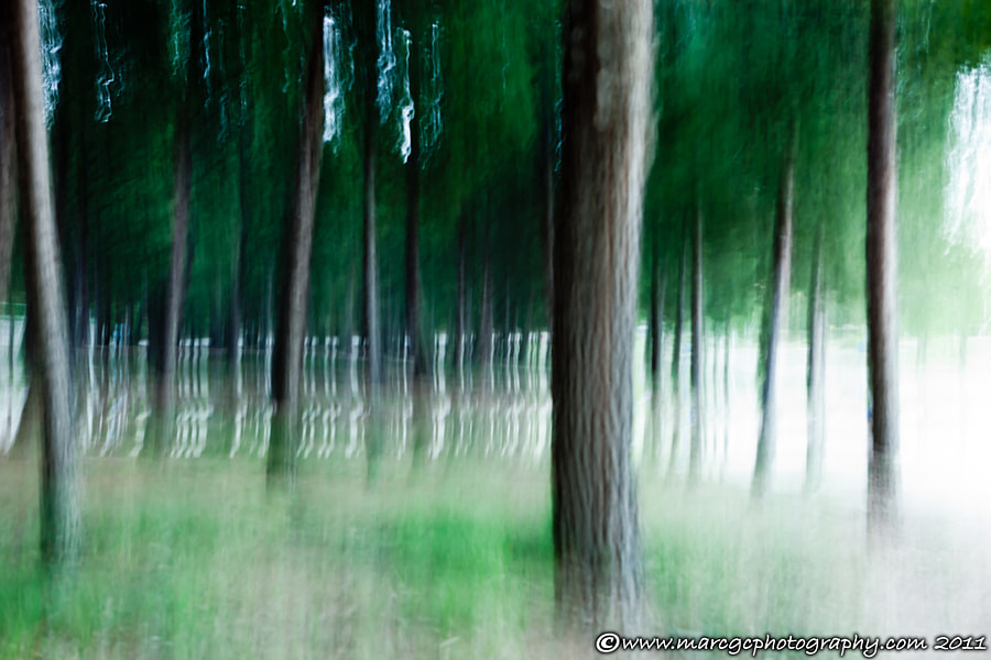 "Join me on my <a href=""https://www.facebook.com/marcgcphotography"" rel=""nofollow"">Facebook Page</a>.  I started playing with long exposure photography, I always love it. I just wanted to experiment panning on a group of tree with a great light contrast on the sides."