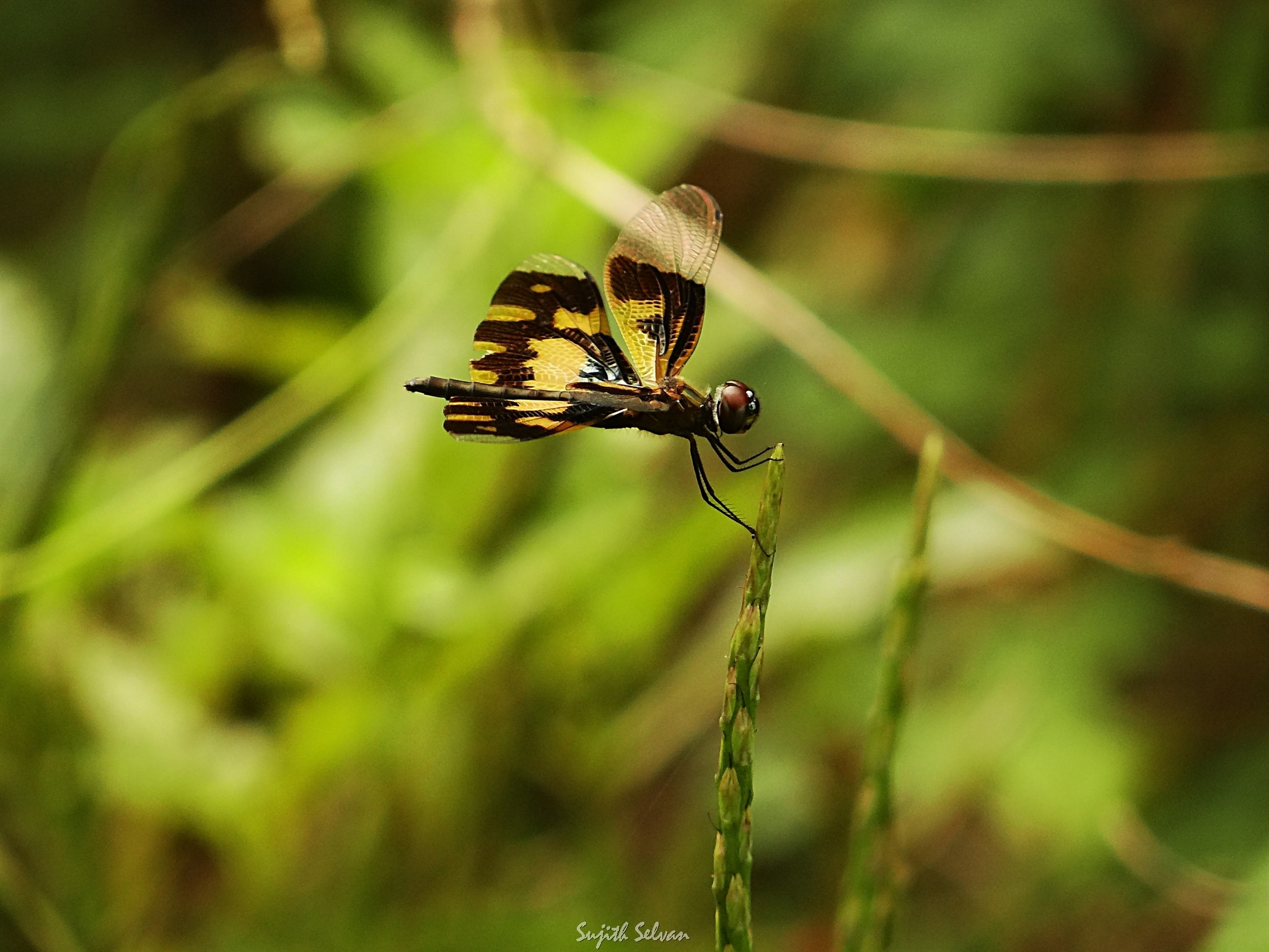 Photograph Art of balance.. by Sujith Selvan on 500px