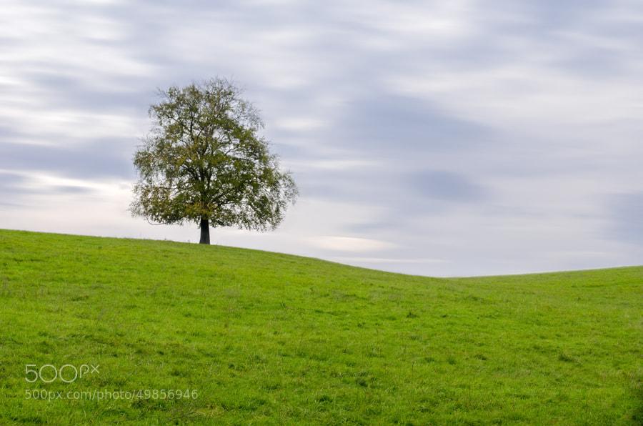 Photograph autumn tree by Gunter Werner on 500px