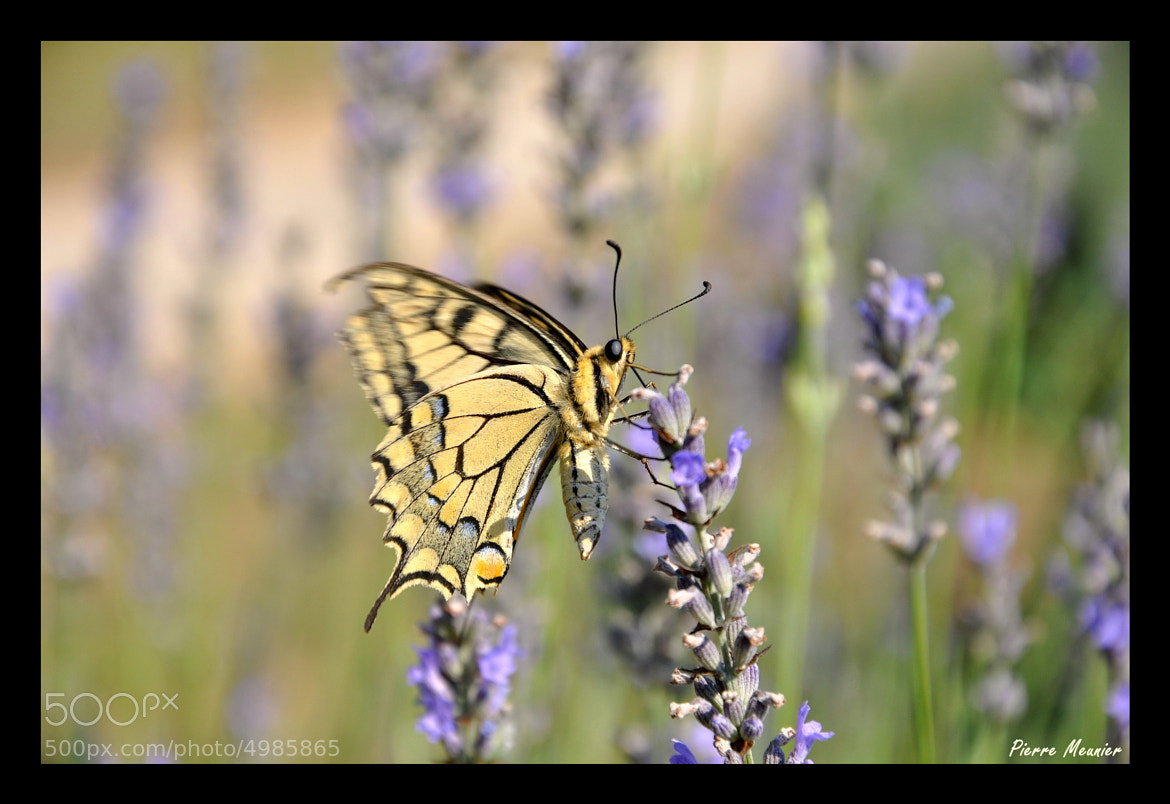 Photograph The meal of the butterfly by Pierre Meunier on 500px