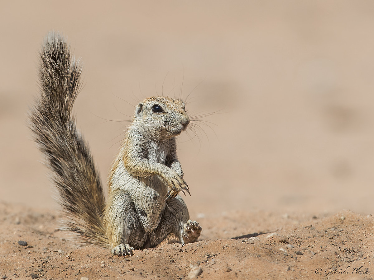 Photograph Chippie by Gabriela Plesea on 500px