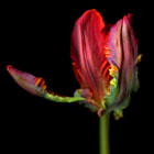 THEME: Valentine