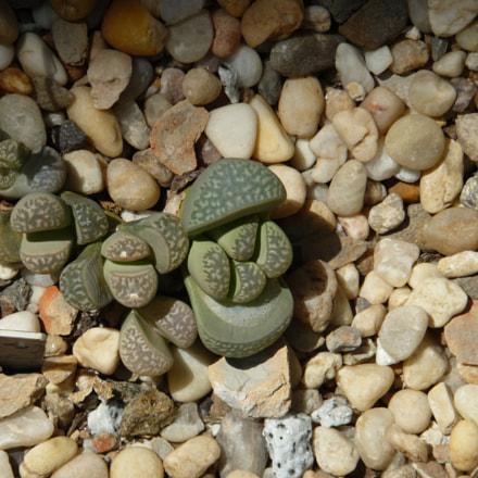 stones & cactus