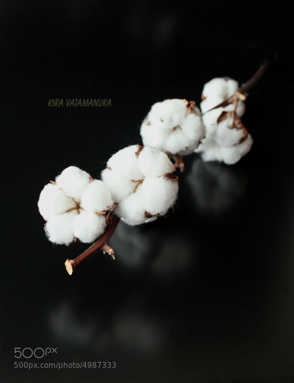 Photograph 100% cotton by Kira Vatamanuka on 500px