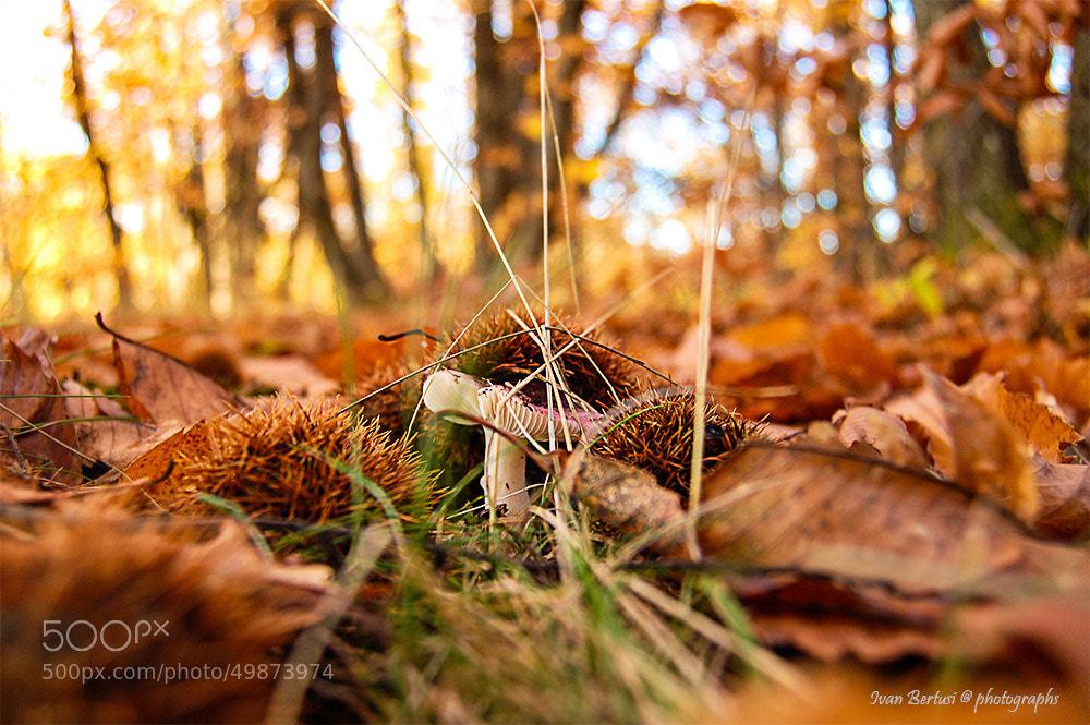 Photograph Nel cuore del bosco .... by Ivan Bertusi on 500px