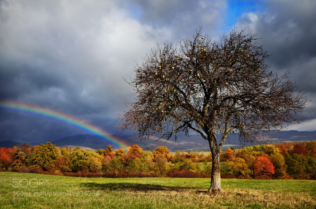 Photograph Rainbow and the yellow stars by Peter Kováč on 500px