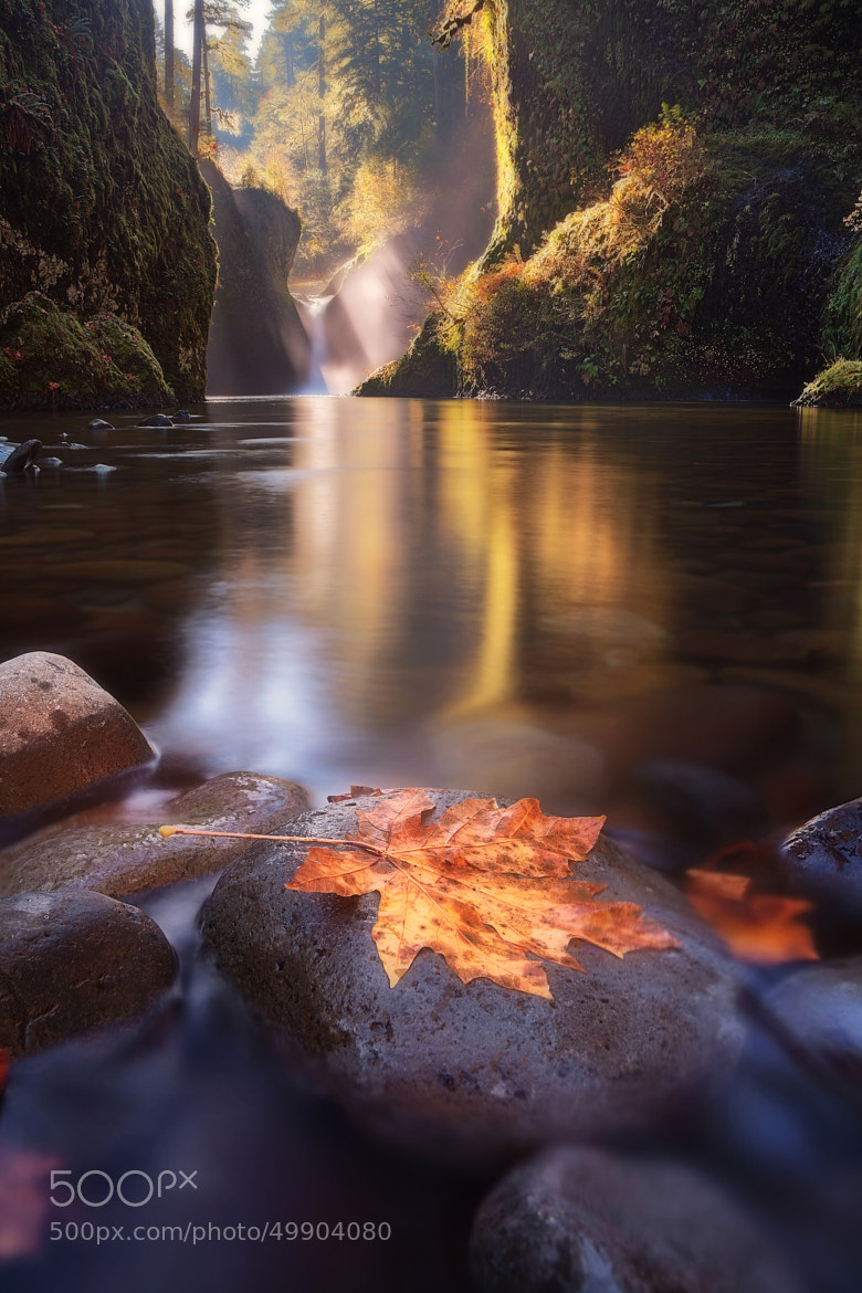 Photograph Punch-Drunk Reverie by Tula Top on 500px