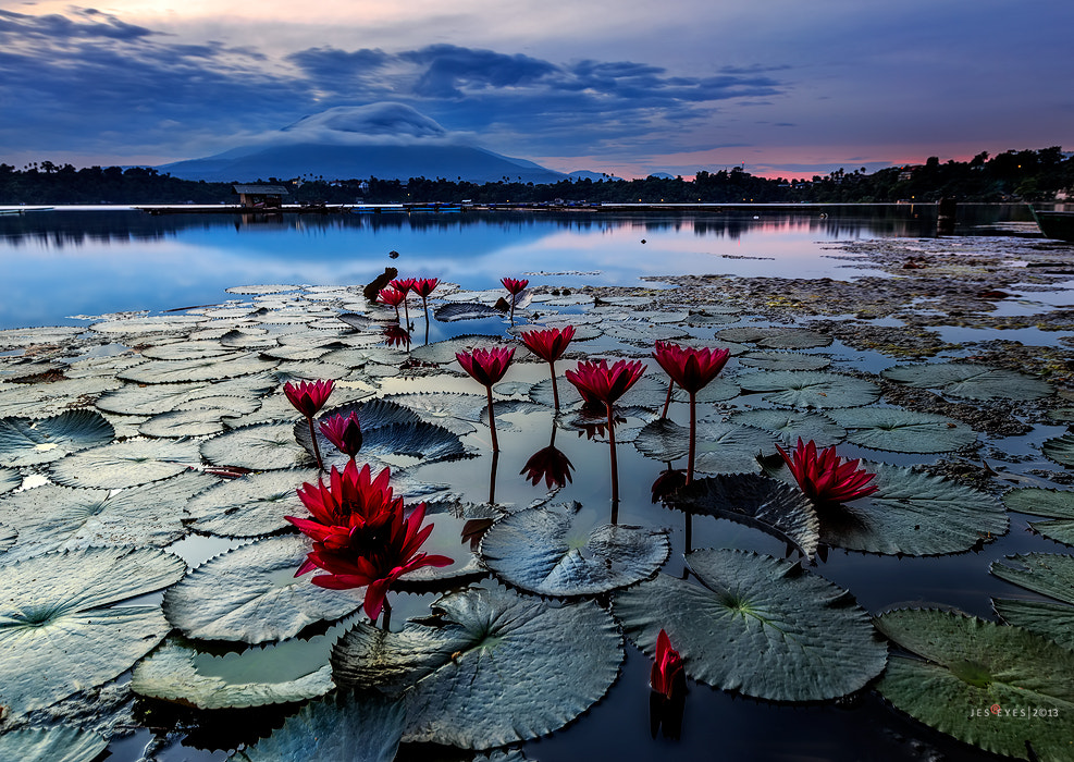 Photograph Flowerful*** by Jes Reyes on 500px