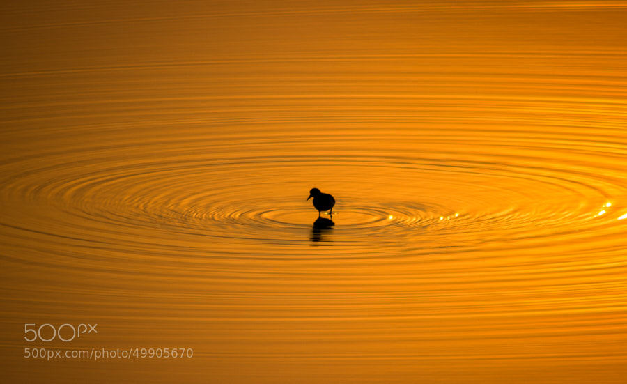 Photograph Bird in Waves by Arun Kumar on 500px